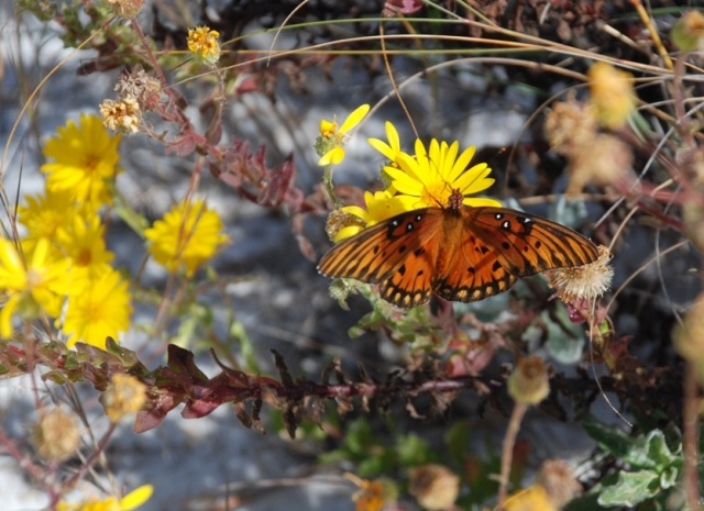 Flowers and butterflies could be seen frequently while walking in the dunes.